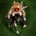 033-insektenfotos-spinnenfotos-gottesanbeterin-fliegen-kaefer-andyhunger.jpg