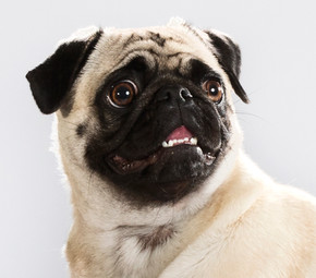 Hundefotos Hundeportraits 049.jpg