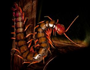 036-insektenfotos-spinnenfotos-gottesanbeterin-fliegen-kaefer-andyhunger.jpg