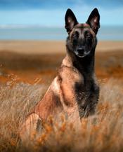 Hundefotos Hundeportraits 031.jpg