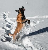 Hundefotos Hundeportraits 020.jpg