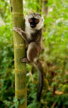040-säugetiere-affen-raubkatzen-gorillas-tierfotos-andyhunger.jpg