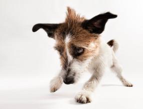 Hundefotos Hundeportraits 085.jpg