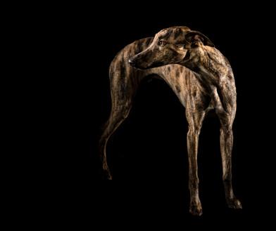 Hundefotos Hundeportraits 062.jpg