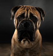 Hundefotos Hundeportraits 048.jpg