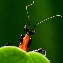 019-insektenfotos-spinnenfotos-gottesanbeterin-fliegen-kaefer-andyhunger.jpg