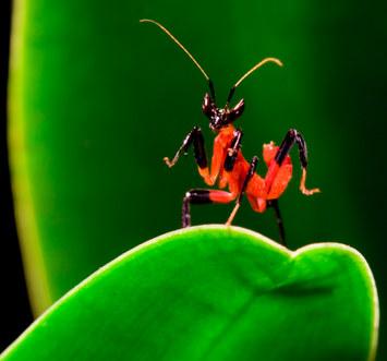 017-insektenfotos-spinnenfotos-gottesanbeterin-fliegen-kaefer-andyhunger.jpg