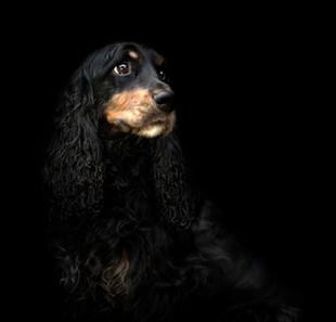Hundefotos Hundeportraits 050.jpg