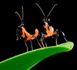 023-insektenfotos-spinnenfotos-gottesanbeterin-fliegen-kaefer-andyhunger.jpg