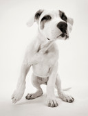 Hundefotos Hundeportraits 056.jpg