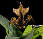 027-insektenfotos-spinnenfotos-gottesanbeterin-fliegen-kaefer-andyhunger.jpg