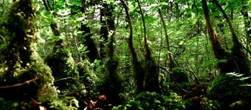 013-landschaftsfotos-naturfotos-pflanzenfotos-botanik-bluetenfotos-andyhunger.jpg