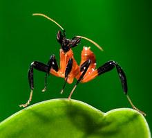 002-insektenfotos-spinnenfotos-gottesanbeterin-fliegen-kaefer-andyhunger.jpg