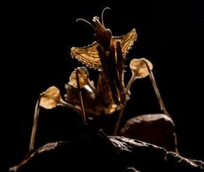 029-insektenfotos-spinnenfotos-gottesanbeterin-fliegen-kaefer-andyhunger.jpg