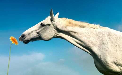 Pferdefotos - Andy Hunger