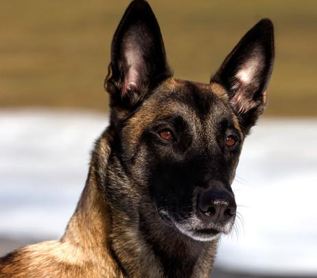 Hundefotos Hundeportraits 036.jpg