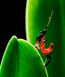 020-insektenfotos-spinnenfotos-gottesanbeterin-fliegen-kaefer-andyhunger.jpg