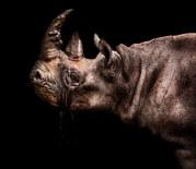 027-säugetiere-affen-raubkatzen-gorillas-tierfotos-andyhunger.jpg