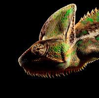 014-echsen-chameleons-geckos-krokodile-andy-hunger.jpg