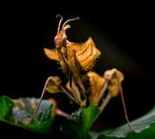 031-insektenfotos-spinnenfotos-gottesanbeterin-fliegen-kaefer-andyhunger.jpg
