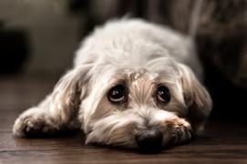 Hundefotos Hundeportraits 073.jpg