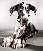Hundefotos Hundeportraits 076.jpg