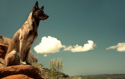 Hundefotos Hundeportraits 034.jpg
