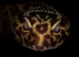 041-echsen-chameleons-geckos-krokodile-andy-hunger.jpg