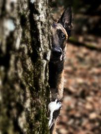 Hundefotos Hundeportraits 026.jpg
