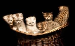 007-katzenfotos-katzenbabys-andyhunger-fotoshooting