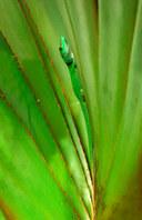 033-echsen-chameleons-geckos-krokodile-andy-hunger.jpg