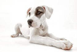 Hundefotos Hundeportraits 055.jpg