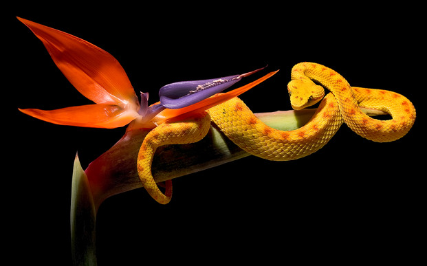 Schlangenfotos - Andy Hunger