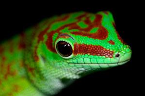 032-echsen-chameleons-geckos-krokodile-andy-hunger.jpg