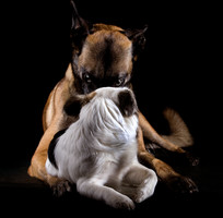 Hundefotos Hundeportraits 015.jpg