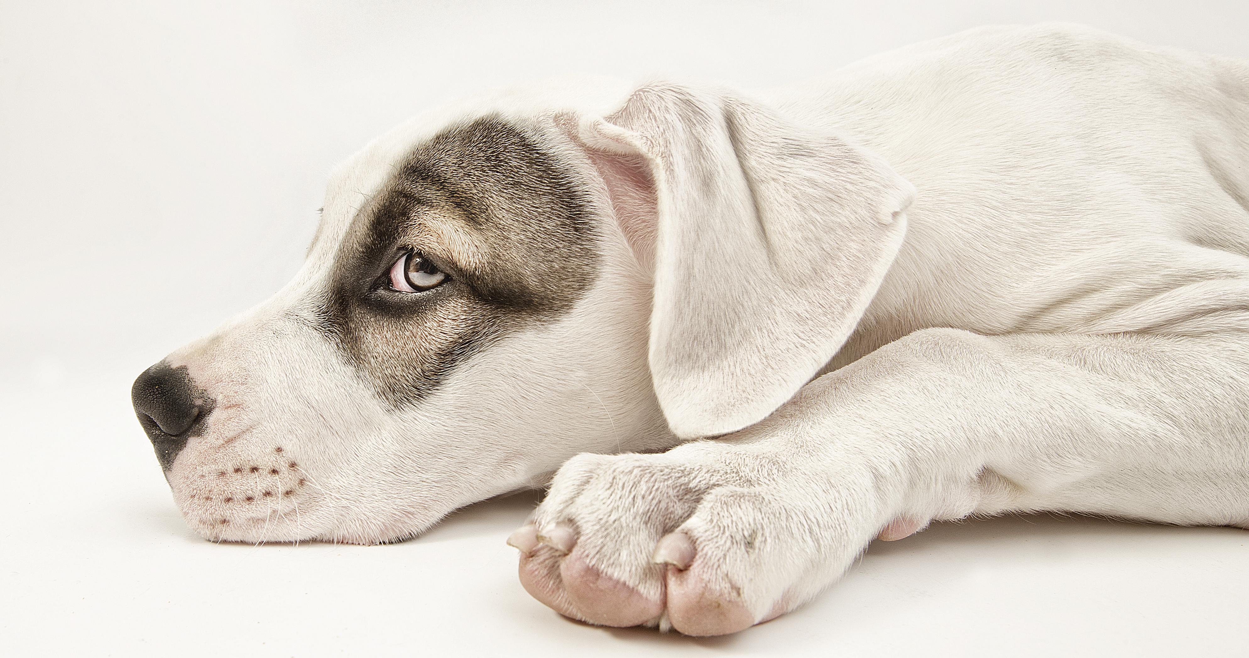 013-hundefotos-hundefotografie-hundebilder-hundeportraits-woelfe-caniden-hundefotograf-hundewelpen.h