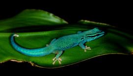 035-echsen-chameleons-geckos-krokodile-andy-hunger.jpg