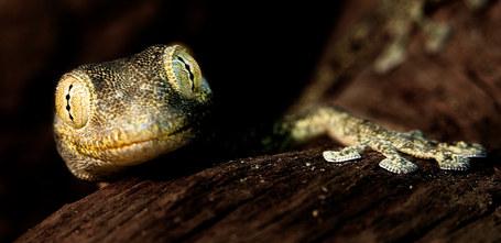 027-echsen-chameleons-geckos-krokodile-andy-hunger.jpg