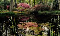 004-landschaftsfotos-naturfotos-pflanzenfotos-botanik-bluetenfotos-andyhunger.jpg