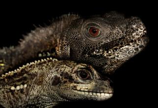 029-echsen-chameleons-geckos-krokodile-andy-hunger.jpg