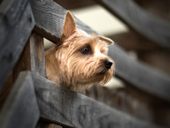 Hundefotos Hundeportraits 046.jpg