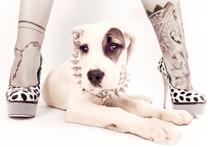 Hundefotos Hundeportraits 057.jpg