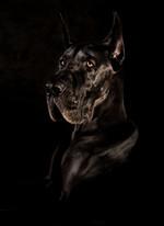 Hundefotos Hundeportraits 063.jpg