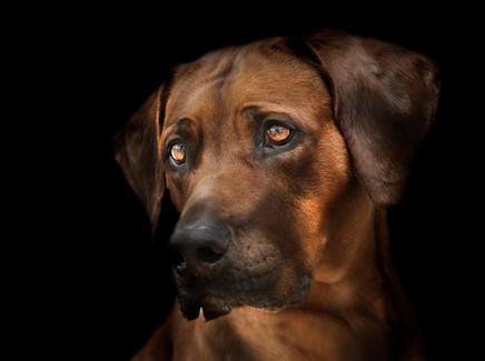 Hundefotos Hundeportraits 061.jpg