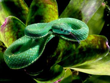 058-schlangenfotos-giftschlangenfotos-reptilienfotos-andyhunger.jpg