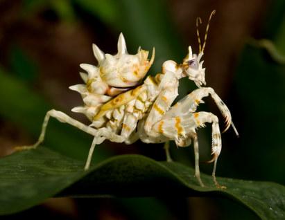 043-insektenfotos-spinnenfotos-gottesanbeterin-fliegen-kaefer-andyhunger.jpg