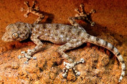 030-echsen-chameleons-geckos-krokodile-andy-hunger.jpg
