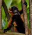 037-säugetiere-affen-raubkatzen-gorillas-tierfotos-andyhunger.jpg