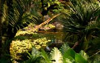 014-landschaftsfotos-naturfotos-pflanzenfotos-botanik-bluetenfotos-andyhunger.jpg