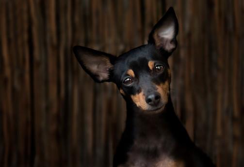 Hundefotos Hundeportraits 051.jpg